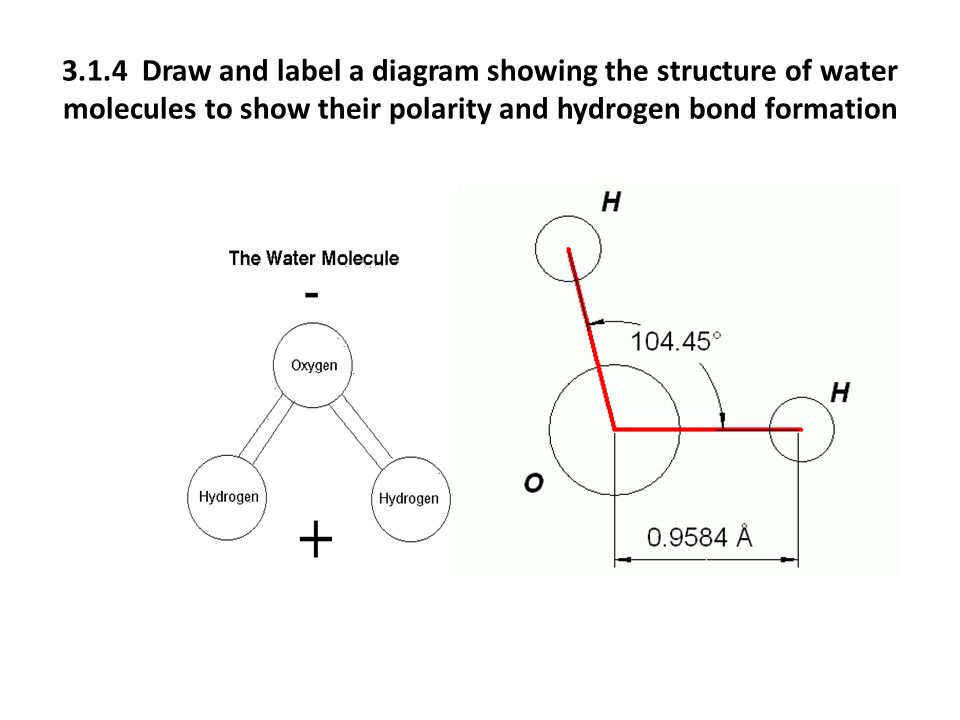 3.1.4 Draw and label a diagram showing the structure of water molecules to show their polarity and hydrogen bond formation