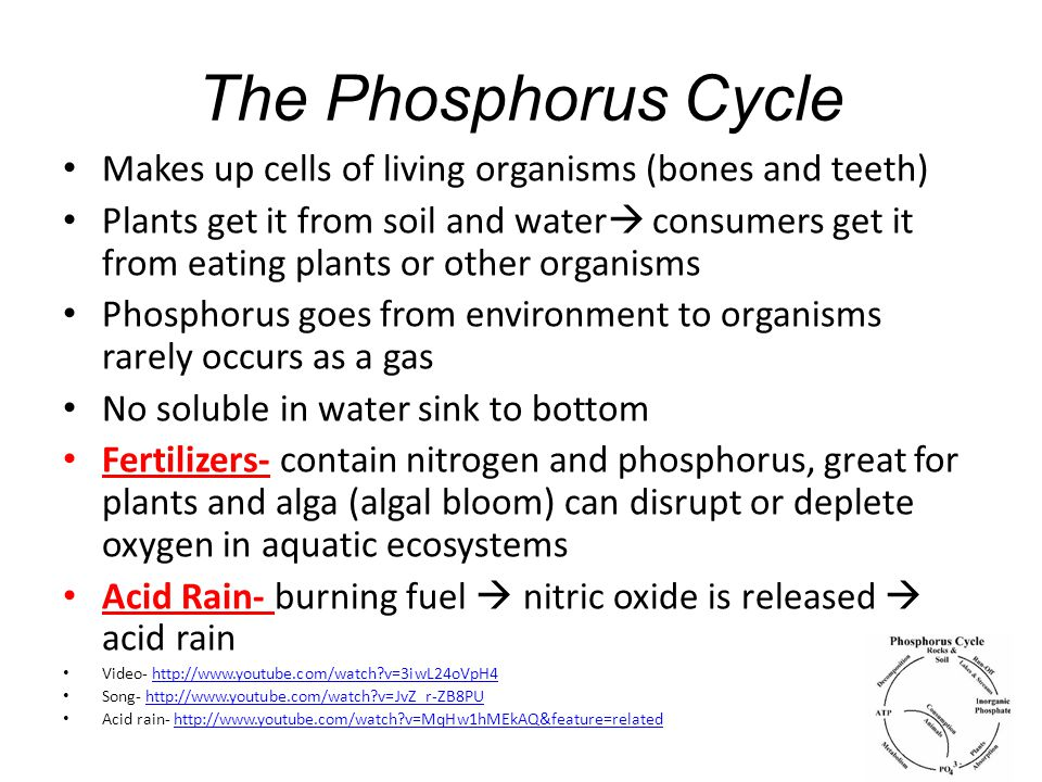 The Phosphorus Cycle Makes up cells of living organisms (bones and teeth) Plants get it from soil and water  consumers get it from eating plants or other organisms Phosphorus goes from environment to organisms rarely occurs as a gas No soluble in water sink to bottom Fertilizers- contain nitrogen and phosphorus, great for plants and alga (algal bloom) can disrupt or deplete oxygen in aquatic ecosystems Acid Rain- burning fuel  nitric oxide is released  acid rain Video- http://www.youtube.com/watch?v=3iwL24oVpH4http://www.youtube.com/watch?v=3iwL24oVpH4 Song- http://www.youtube.com/watch?v=JvZ_r-ZB8PUhttp://www.youtube.com/watch?v=JvZ_r-ZB8PU Acid rain- http://www.youtube.com/watch?v=MqHw1hMEkAQ&feature=relatedhttp://www.youtube.com/watch?v=MqHw1hMEkAQ&feature=related