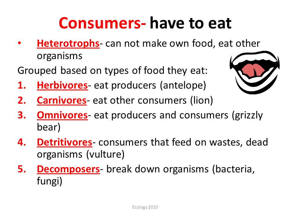 Ecology 2010 Consumers- have to eat Heterotrophs- can not make own food, eat other organisms Grouped based on types of food they eat: 1.Herbivores- eat producers (antelope) 2.Carnivores- eat other consumers (lion) 3.Omnivores- eat producers and consumers (grizzly bear) 4.Detritivores- consumers that feed on wastes, dead organisms (vulture) 5.Decomposers- break down organisms (bacteria, fungi)