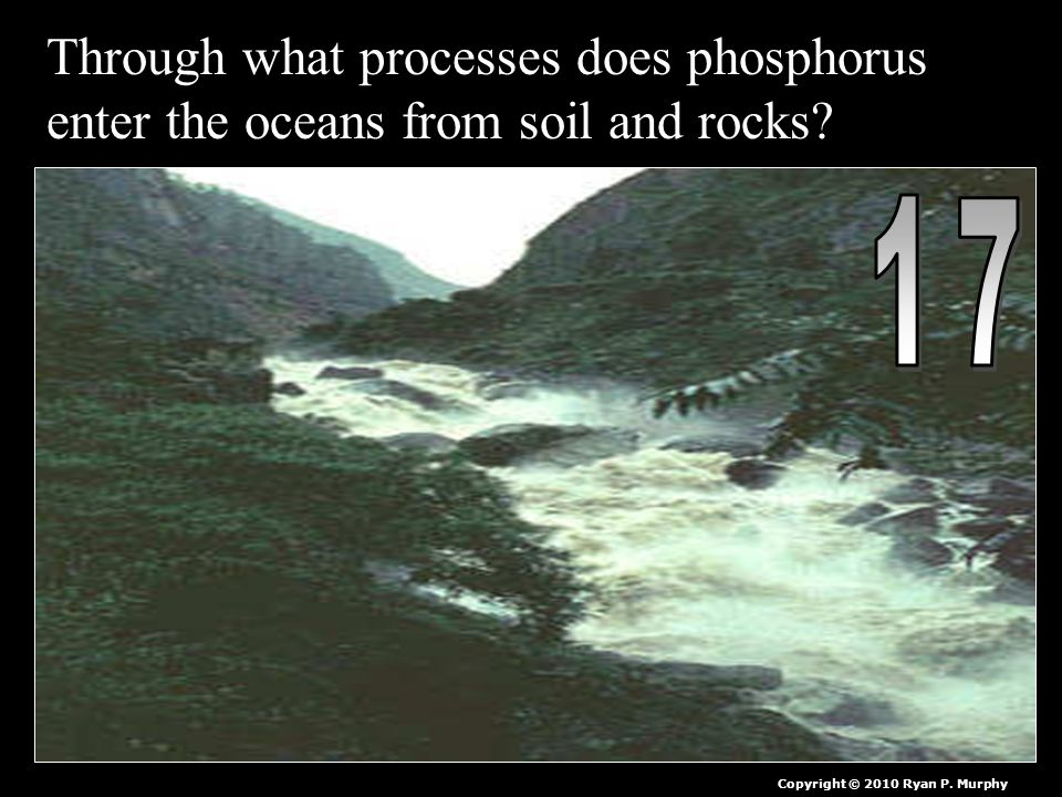 Through what processes does phosphorus enter the oceans from soil and rocks.
