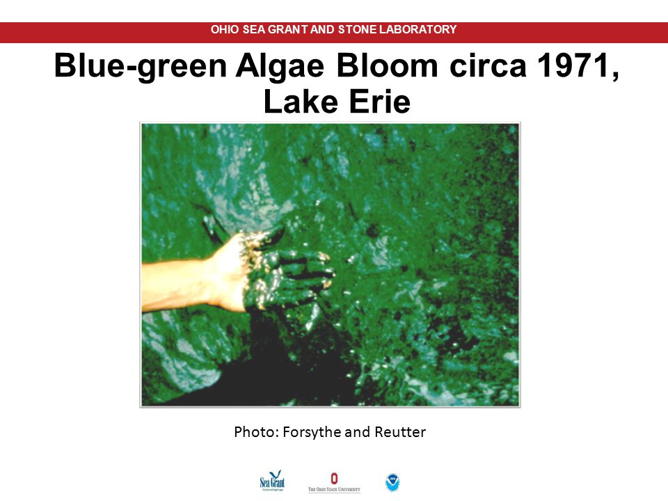 OHIO SEA GRANT AND STONE LABORATORY Blue-green Algae Bloom circa 1971, Lake Erie Photo: Forsythe and Reutter