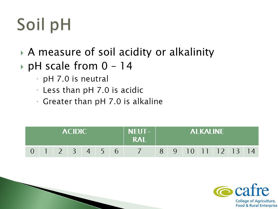  A measure of soil acidity or alkalinity  pH scale from 0 – 14  pH 7.0 is neutral  Less than pH 7.0 is acidic  Greater than pH 7.0 is alkaline ACIDICNEUT- RAL ALKALINE 01234567891011121314