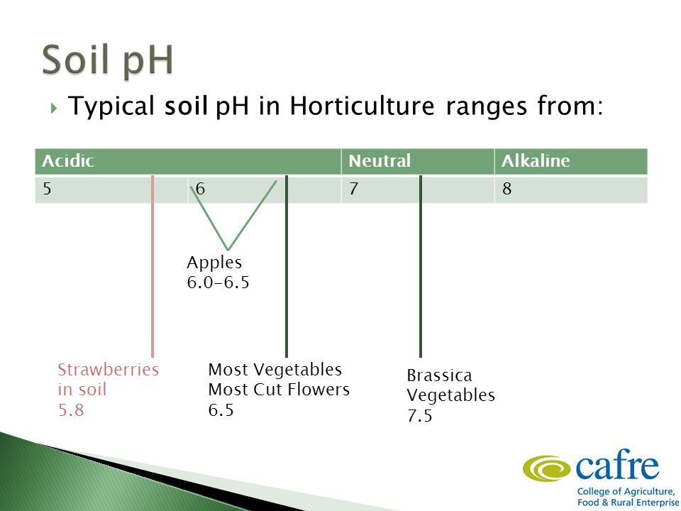  Typical soil pH in Horticulture ranges from: AcidicNeutralAlkaline 5678 Most Vegetables Most Cut Flowers 6.5 Brassica Vegetables 7.5 Strawberries in soil 5.8 Apples 6.0-6.5