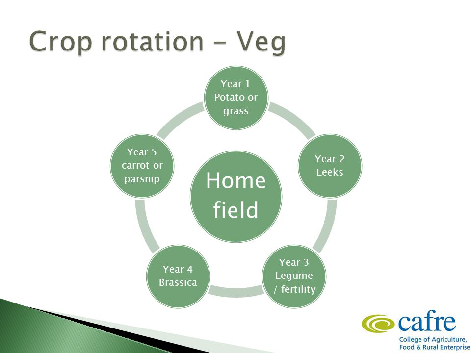 Home field Year 1 Potato or grass Year 2 Leeks Year 3 Legume / fertility Year 4 Brassica Year 5 carrot or parsnip