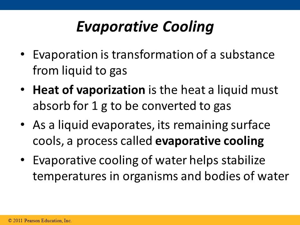Evaporative Cooling Evaporation is transformation of a substance from liquid to gas Heat of vaporization is the heat a liquid must absorb for 1 g to be converted to gas As a liquid evaporates, its remaining surface cools, a process called evaporative cooling Evaporative cooling of water helps stabilize temperatures in organisms and bodies of water © 2011 Pearson Education, Inc.