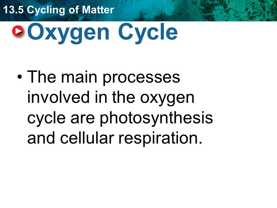 13.5 Cycling of Matter Oxygen Cycle The main processes involved in the oxygen cycle are photosynthesis and cellular respiration.