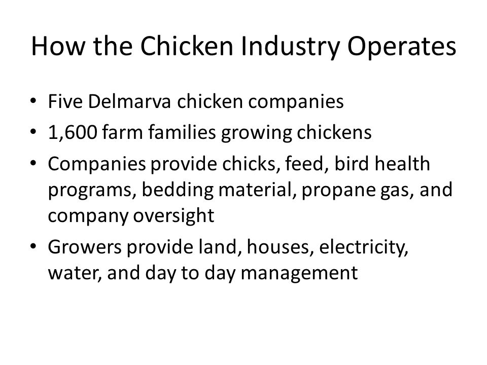 How the Chicken Industry Operates Five Delmarva chicken companies 1,600 farm families growing chickens Companies provide chicks, feed, bird health programs, bedding material, propane gas, and company oversight Growers provide land, houses, electricity, water, and day to day management