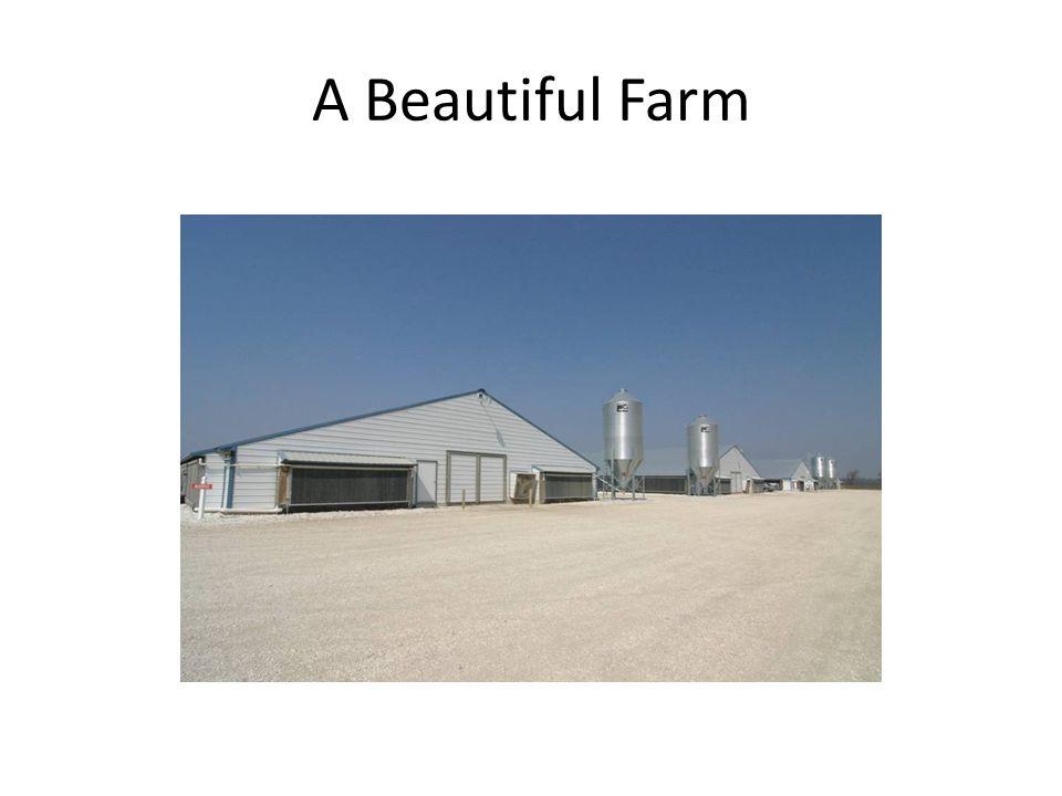 A Beautiful Farm
