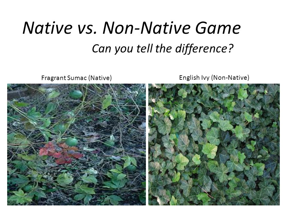 Native vs. Non-Native Game Can you tell the difference.