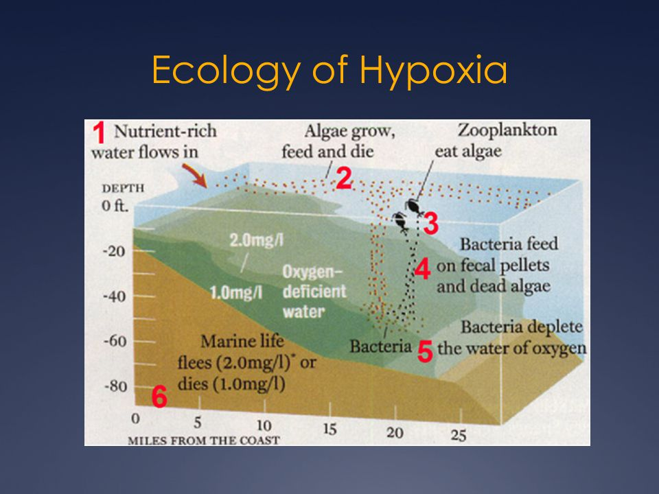 Ecology of Hypoxia