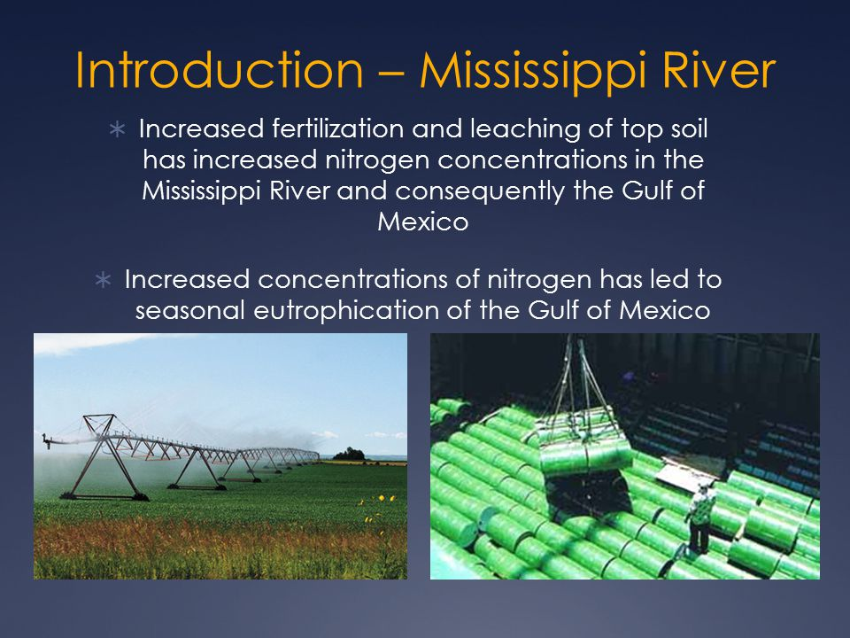 Introduction – Mississippi River  Increased fertilization and leaching of top soil has increased nitrogen concentrations in the Mississippi River and consequently the Gulf of Mexico  Increased concentrations of nitrogen has led to seasonal eutrophication of the Gulf of Mexico