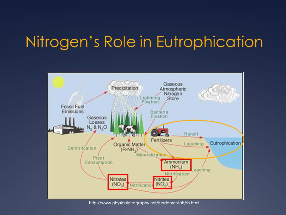 Nitrogen's Role in Eutrophication http://www.physicalgeography.net/fundamentals/9s.html