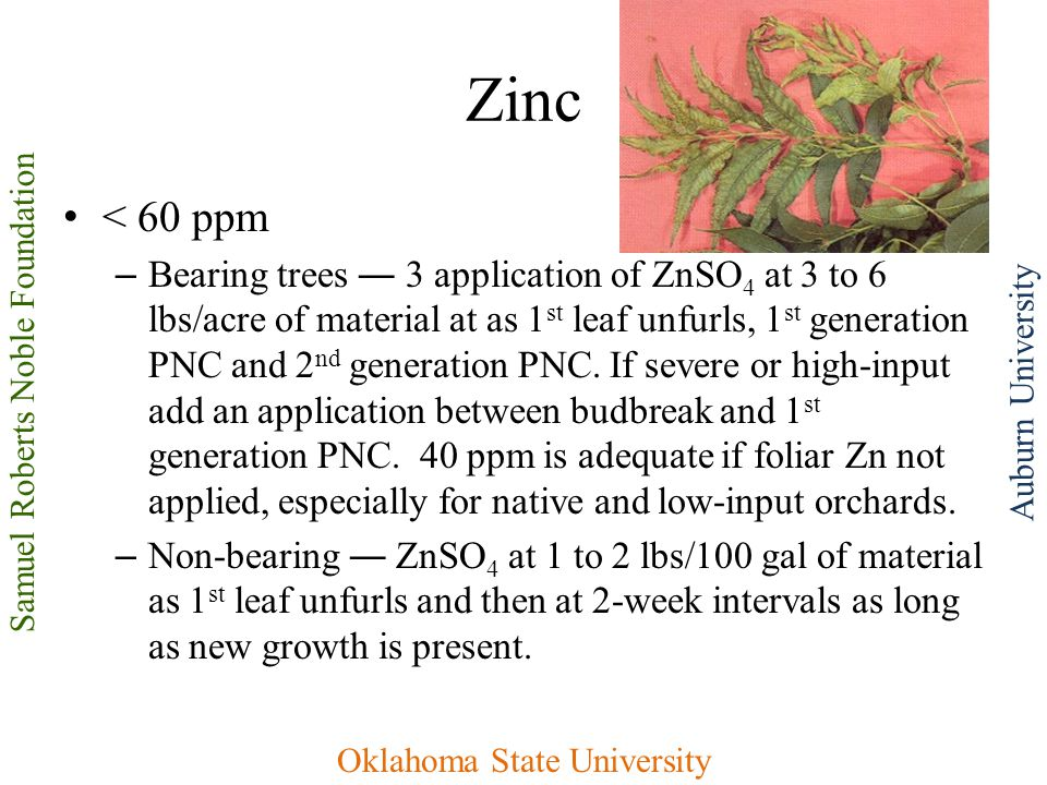 Samuel Roberts Noble Foundation Oklahoma State University Auburn University Zinc < 60 ppm – Bearing trees ― 3 application of ZnSO 4 at 3 to 6 lbs/acre of material at as 1 st leaf unfurls, 1 st generation PNC and 2 nd generation PNC.