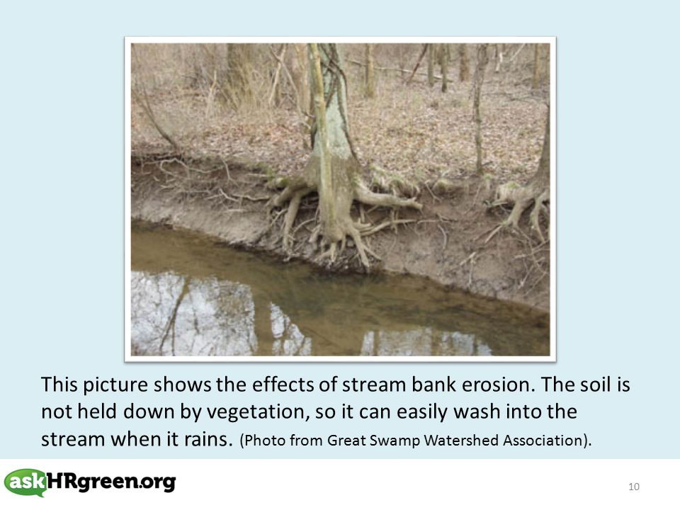 10 This picture shows the effects of stream bank erosion.
