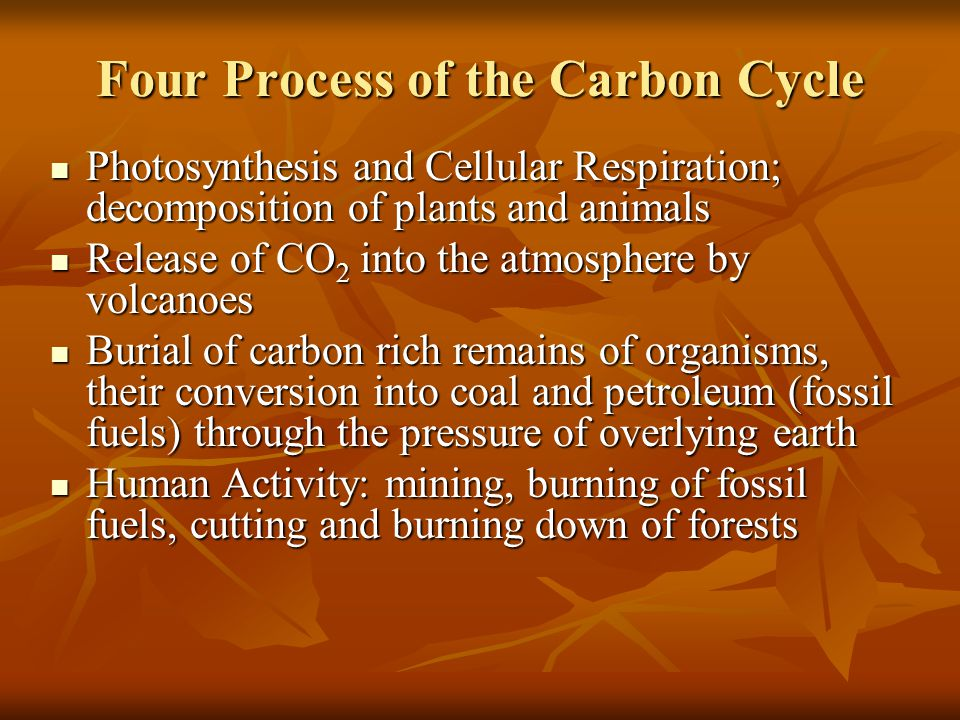 Importance of Carbon Found in all living organisms Found in all living organisms Found in the oceans, air, and certain types of rocks Found in the oce