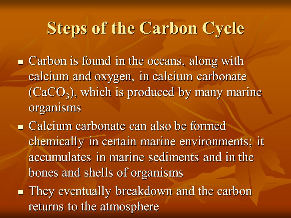 Steps of the Carbon Cycle Carbon is present as carbon dioxide in the atmosphere Carbon is present as carbon dioxide in the atmosphere Released in the