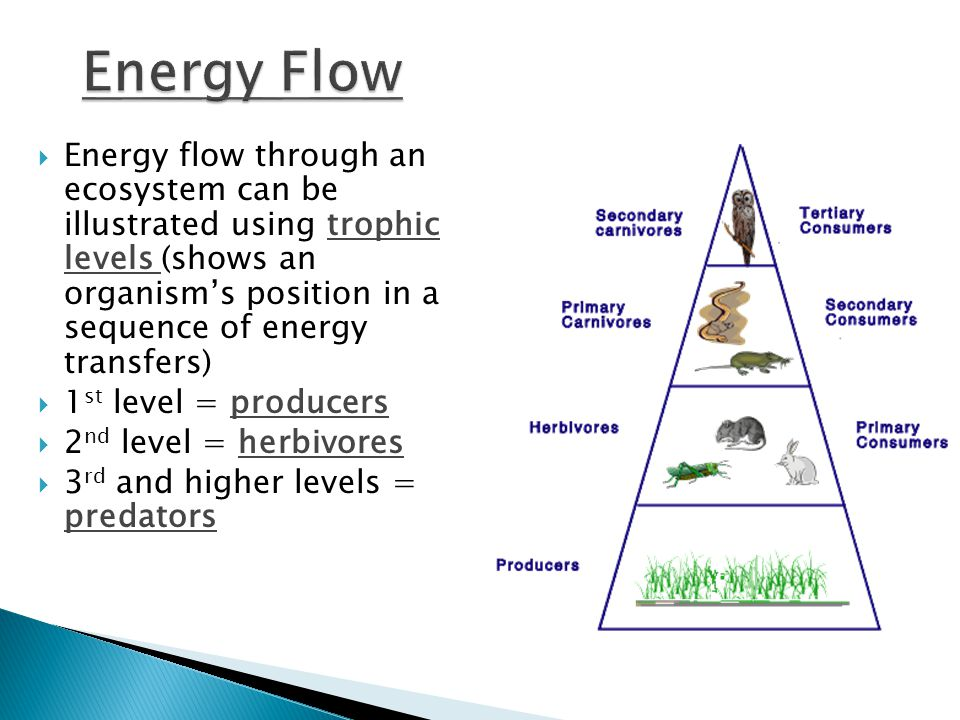  Energy flow through an ecosystem can be illustrated using trophic levels (shows an organism's position in a sequence of energy transfers)  1 st level = producers  2 nd level = herbivores  3 rd and higher levels = predators
