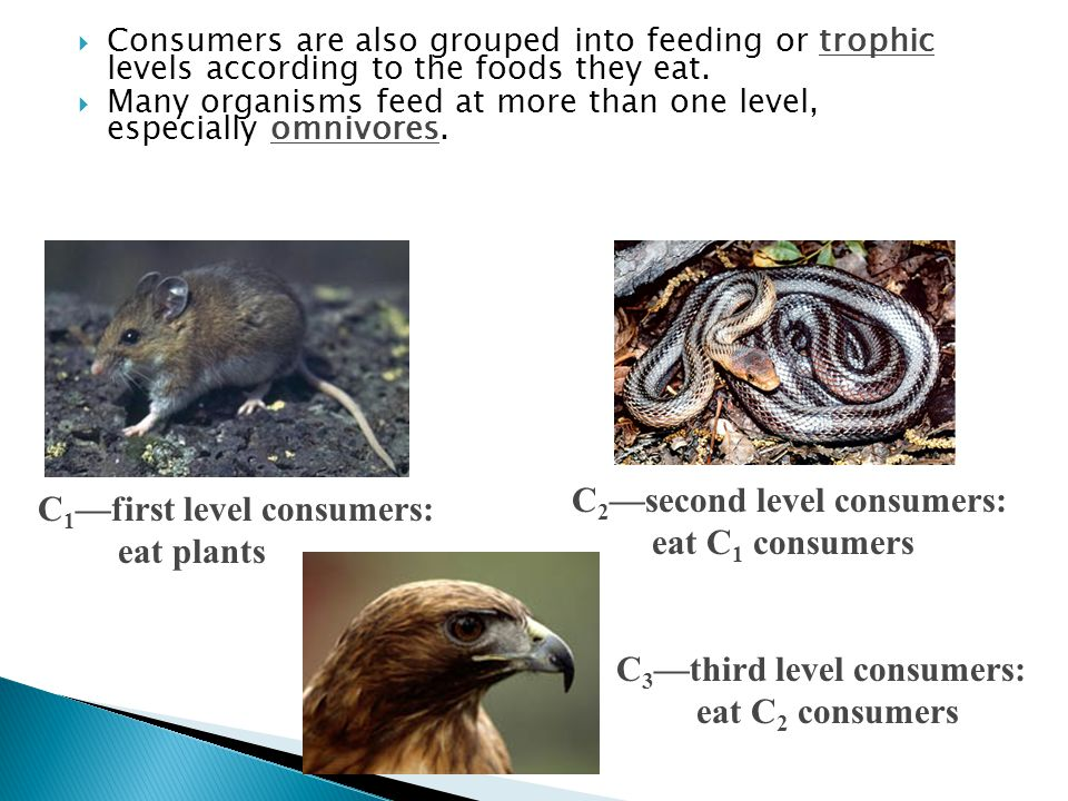  Consumers are also grouped into feeding or trophic levels according to the foods they eat.