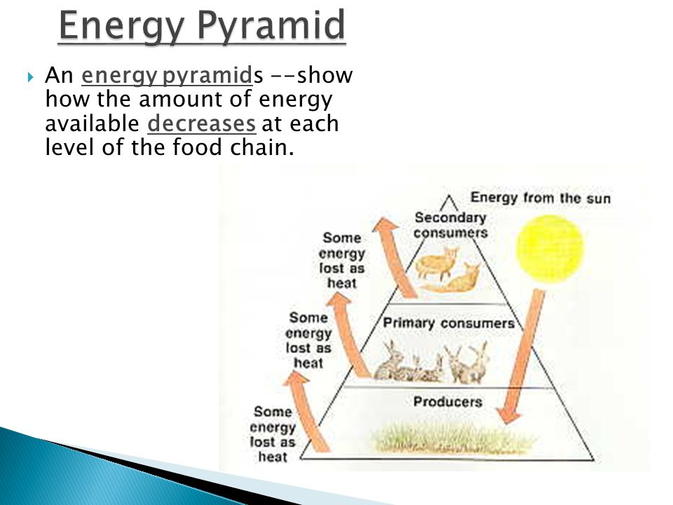  An energy pyramids --show how the amount of energy available decreases at each level of the food chain.