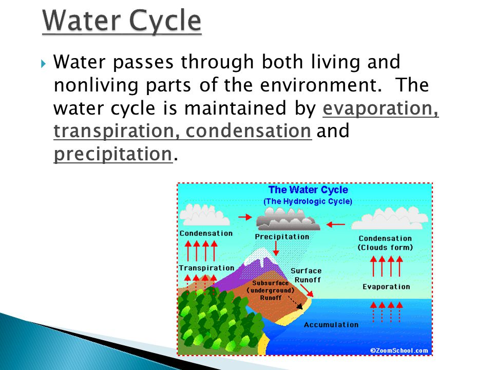  Water passes through both living and nonliving parts of the environment.