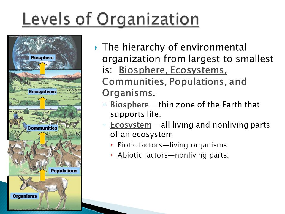  The hierarchy of environmental organization from largest to smallest is: Biosphere, Ecosystems, Communities, Populations, and Organisms.