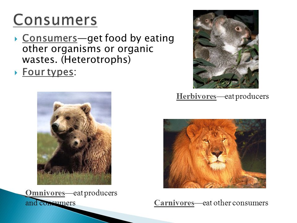  Consumers—get food by eating other organisms or organic wastes.