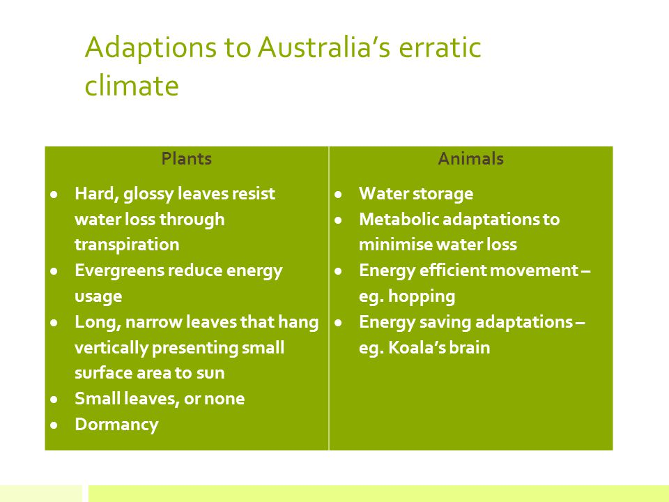 Adaptions to Australia's erratic climate Plants  Hard, glossy leaves resist water loss through transpiration  Evergreens reduce energy usage  Long, narrow leaves that hang vertically presenting small surface area to sun  Small leaves, or none  Dormancy Animals  Water storage  Metabolic adaptations to minimise water loss  Energy efficient movement – eg.
