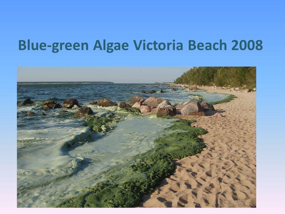 Blue-green Algae Victoria Beach 2008