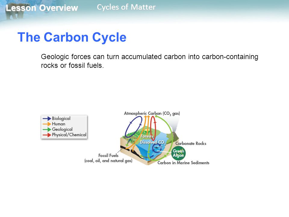 Lesson Overview Lesson Overview Cycles of Matter The Carbon Cycle Geologic forces can turn accumulated carbon into carbon-containing rocks or fossil f