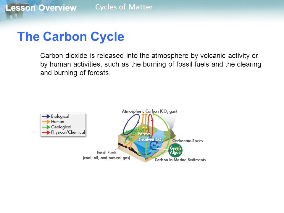 Lesson Overview Lesson Overview Cycles of Matter The Carbon Cycle Carbon dioxide is released into the atmosphere by volcanic activity or by human acti