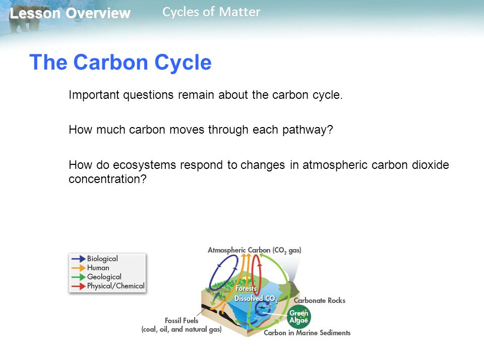 Lesson Overview Lesson Overview Cycles of Matter The Carbon Cycle Important questions remain about the carbon cycle. How much carbon moves through eac