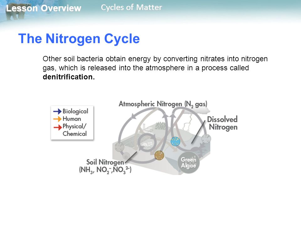 Lesson Overview Lesson Overview Cycles of Matter The Nitrogen Cycle Other soil bacteria obtain energy by converting nitrates into nitrogen gas, which