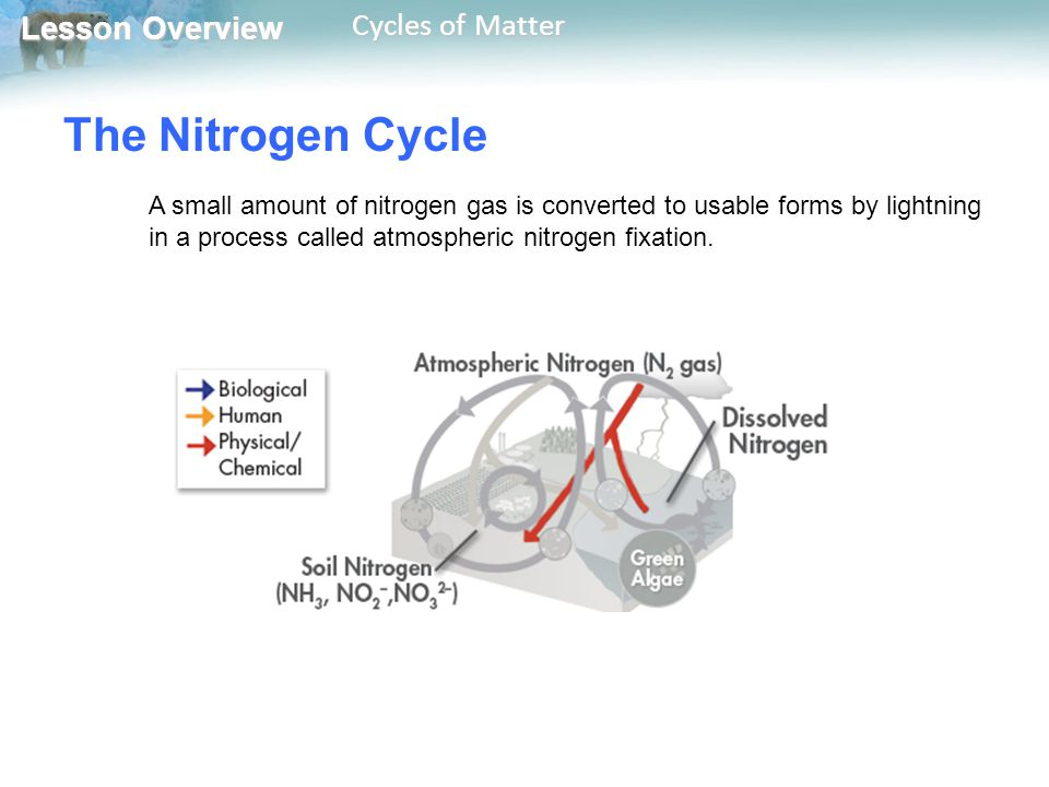 Lesson Overview Lesson Overview Cycles of Matter The Nitrogen Cycle A small amount of nitrogen gas is converted to usable forms by lightning in a proc