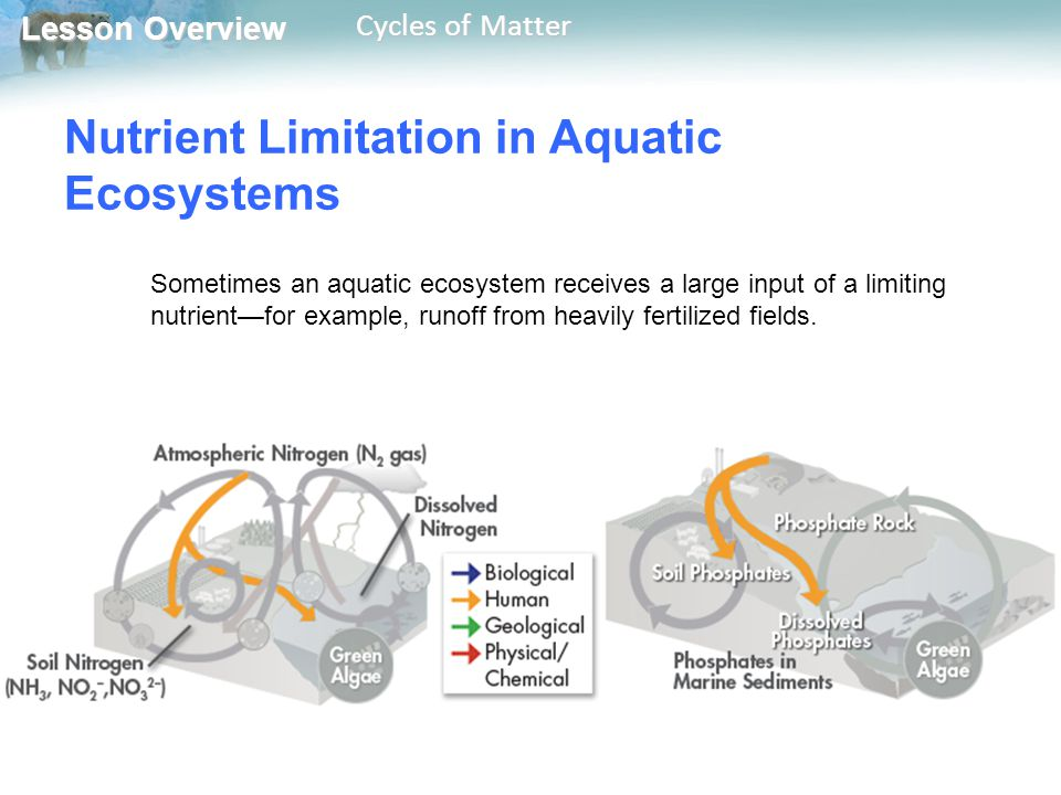 Lesson Overview Lesson Overview Cycles of Matter Nutrient Limitation in Aquatic Ecosystems Sometimes an aquatic ecosystem receives a large input of a