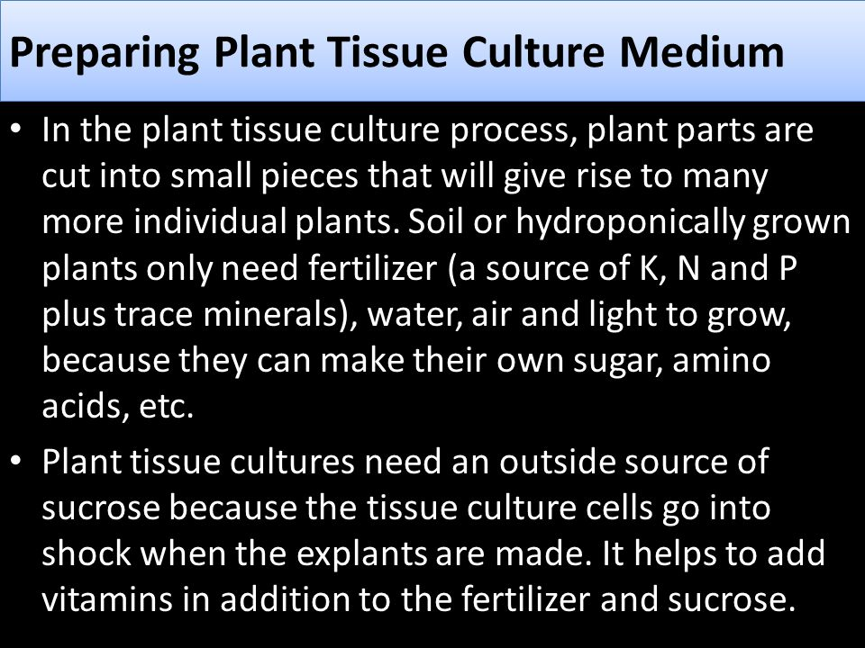 In the plant tissue culture process, plant parts are cut into small pieces that will give rise to many more individual plants. Soil or hydroponically