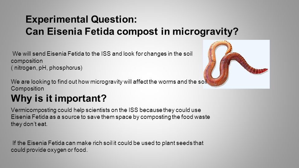 Experimental Question: Can Eisenia Fetida compost in microgravity.