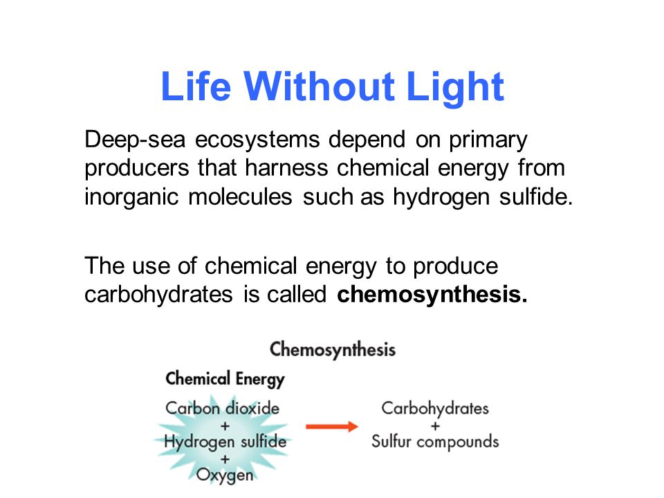 Life Without Light Deep-sea ecosystems depend on primary producers that harness chemical energy from inorganic molecules such as hydrogen sulfide. The