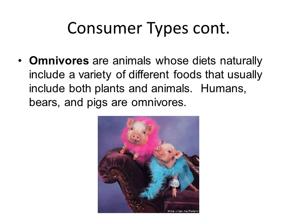 Consumer Types cont. Omnivores are animals whose diets naturally include a variety of different foods that usually include both plants and animals. Hu