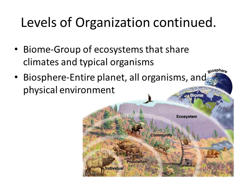 Levels of Organization continued. Biome-Group of ecosystems that share climates and typical organisms Biosphere-Entire planet, all organisms, and phys