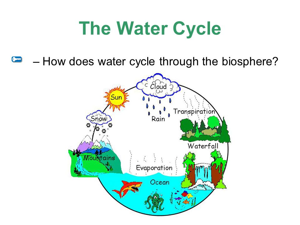 The Water Cycle –How does water cycle through the biosphere?
