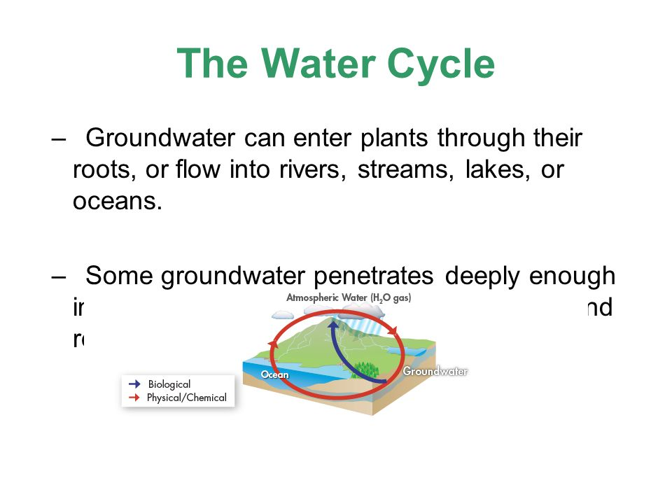 The Water Cycle –Groundwater can enter plants through their roots, or flow into rivers, streams, lakes, or oceans. –Some groundwater penetrates deeply