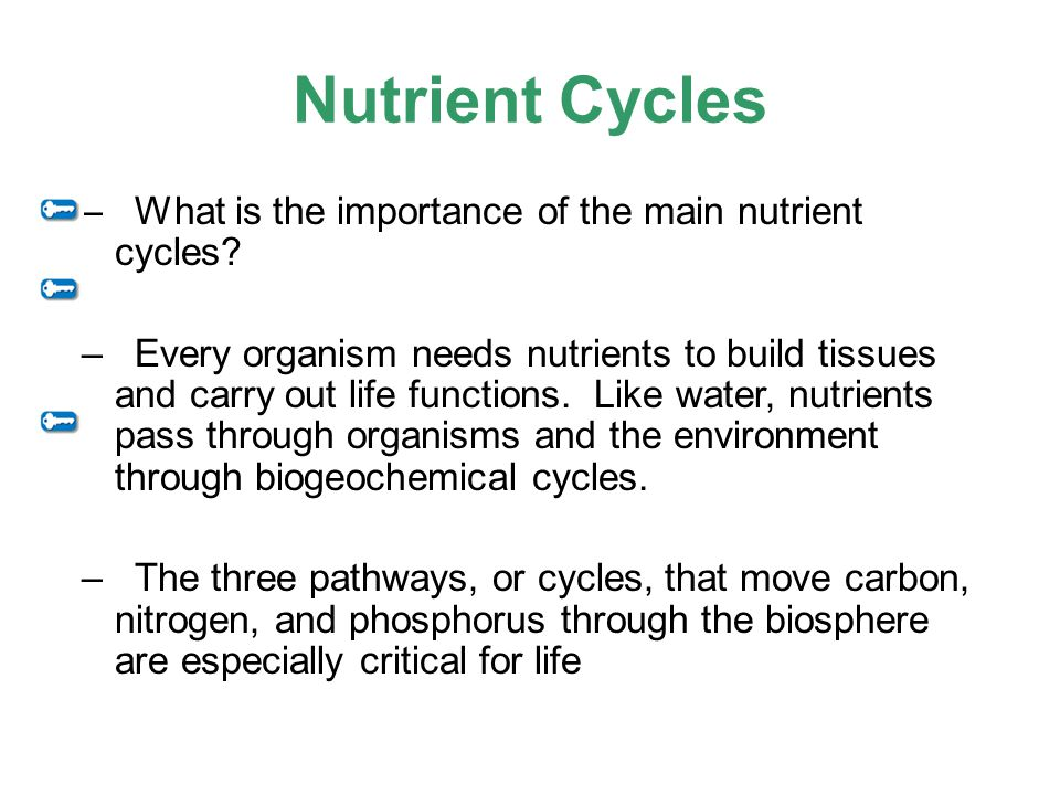 Nutrient Cycles –What is the importance of the main nutrient cycles? –Every organism needs nutrients to build tissues and carry out life functions. Li