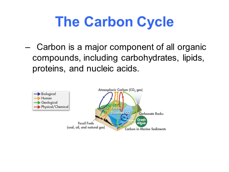 The Carbon Cycle –Carbon is a major component of all organic compounds, including carbohydrates, lipids, proteins, and nucleic acids.