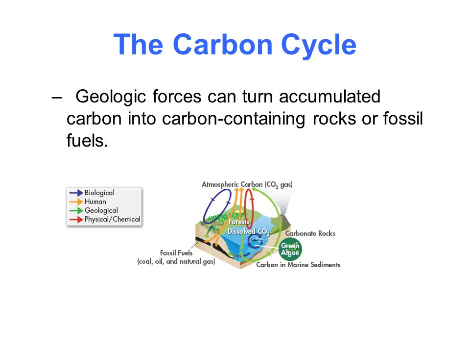 The Carbon Cycle –Geologic forces can turn accumulated carbon into carbon-containing rocks or fossil fuels.