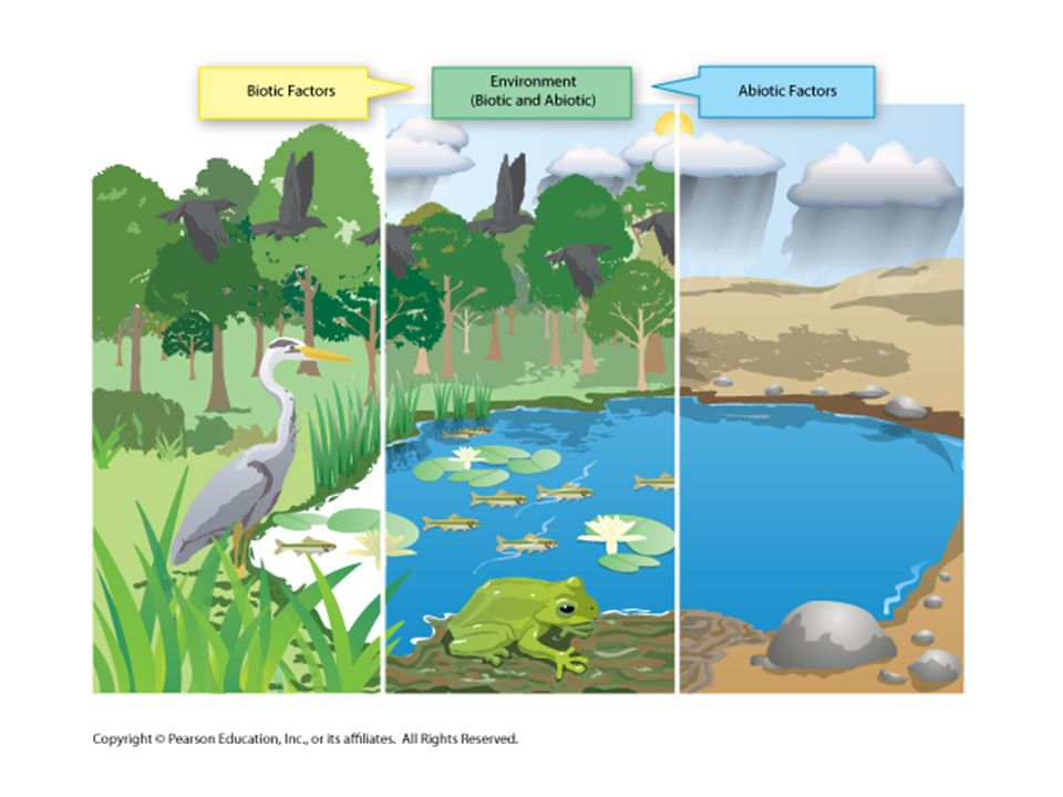 Nutrient Cycles –The chemical substances that an organism needs to sustain life are called nutrients.