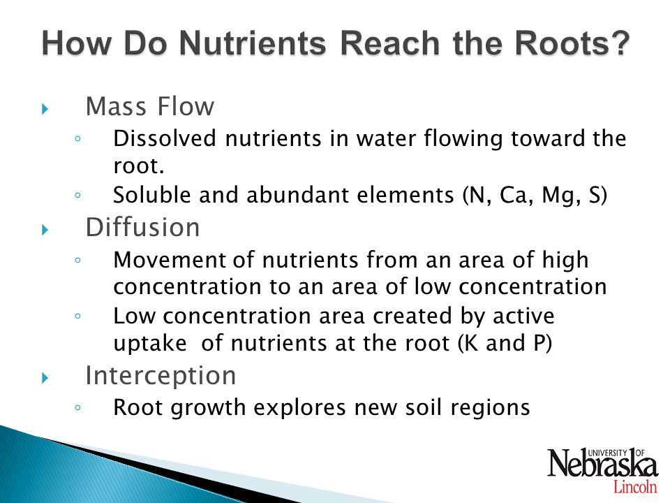  Mass Flow ◦ Dissolved nutrients in water flowing toward the root.