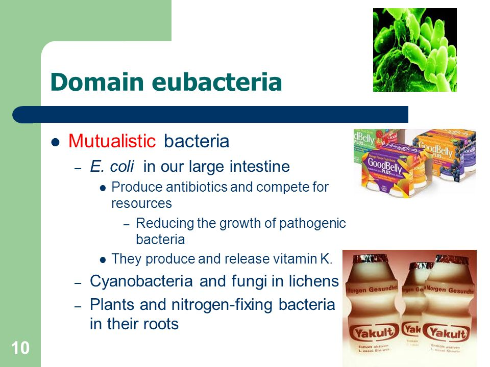10 Domain eubacteria Mutualistic bacteria – E. coli in our large intestine Produce antibiotics and compete for resources – Reducing the growth of path
