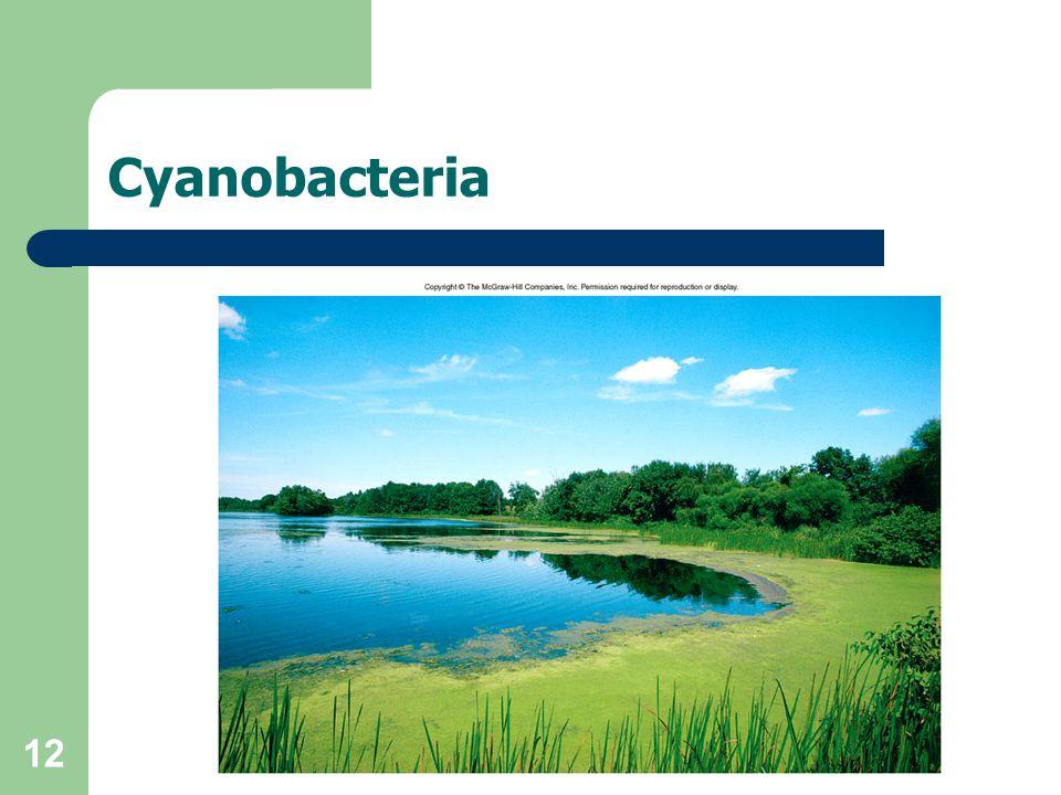 12 Cyanobacteria