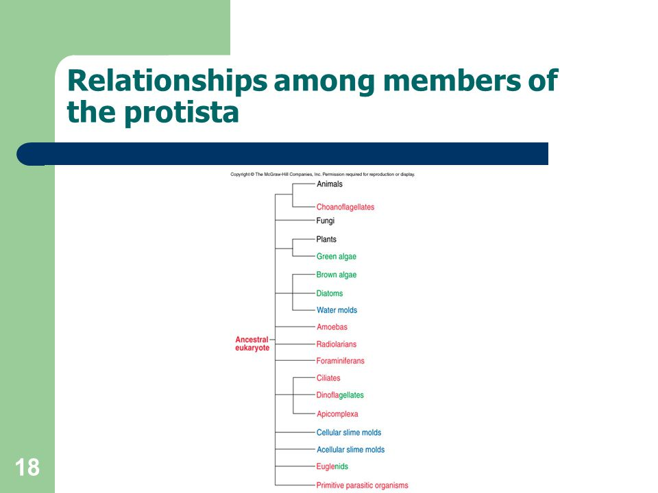 18 Relationships among members of the protista