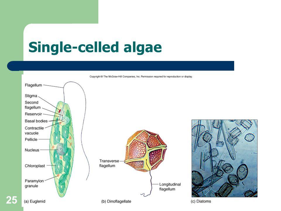 25 Single-celled algae